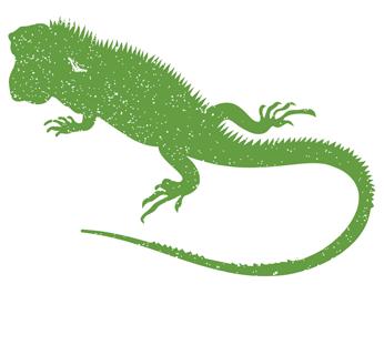 Iguana Trapping