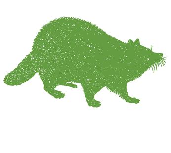 Raccoon Attic